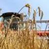 В Григориопольском районе  идет уборка зерновых колосовых культур