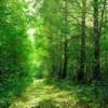 16 сентября — День работника леса и деревообрабатывающей промышленности ПМР
