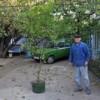 Житель Григориополя подарил своему городу лимонное дерево