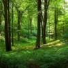 Министерство сельского хозяйства и природных ресурсов проводит информационную кампанию «Сбережём лес»