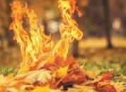 Сжигать листву категорически — ЗАПРЕЩЕНО!
