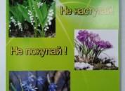 Акция «Сохраним первоцветы» весной 2021 года